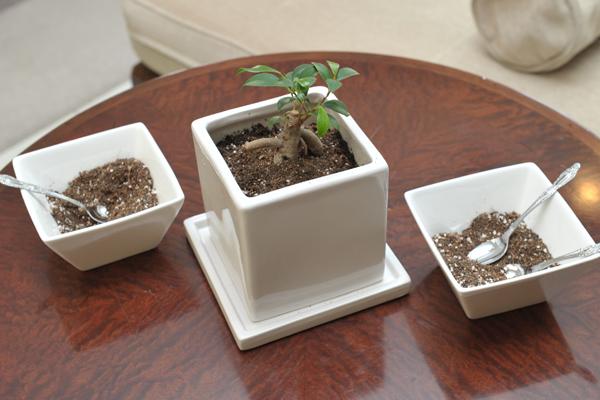 プランナーさんが提案して下さった植樹のセレモニー。ご参列いただいた方にスプーン一杯ずつ土を入れてもらいました。