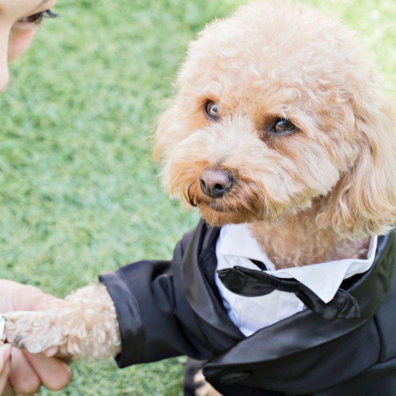 【公式HP限定 ベストレート保証】《2021年12~2022年2月に結婚式希望の方》限定プラン 最大120万円OFF